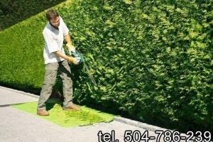Usługi ogrodnicze/cięcie żywopłotów/ wycinki /itp.