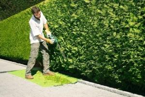 Usługi ogrodnicze / cięcie żywopłotów / wycinki